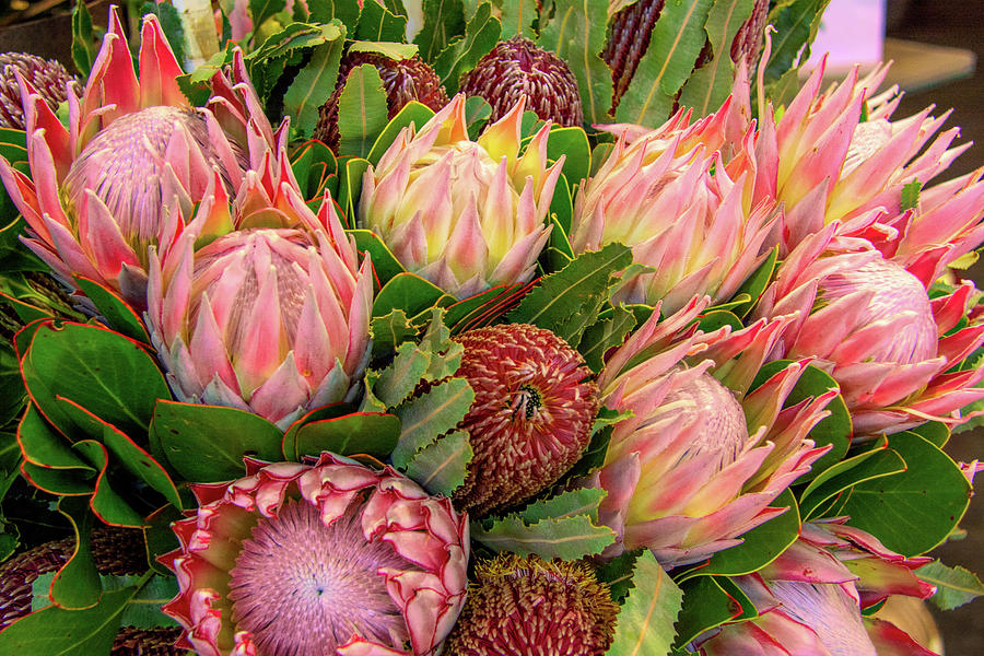 Protea Perfection by Douglas Wielfaert