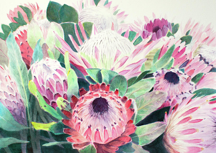 Protea Pinks by Christopher Reid