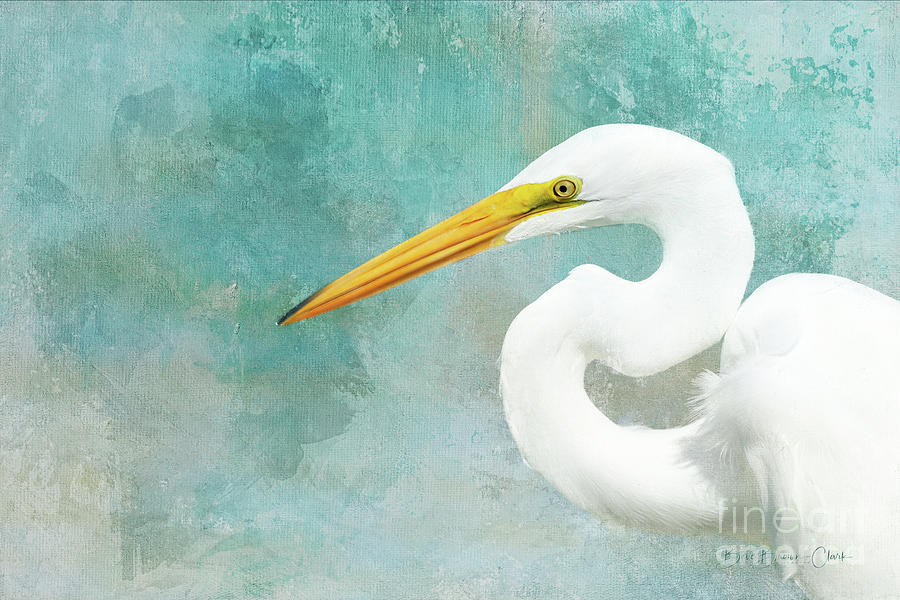 Protrait of a Great Egret by Beve Brown-Clark Photography