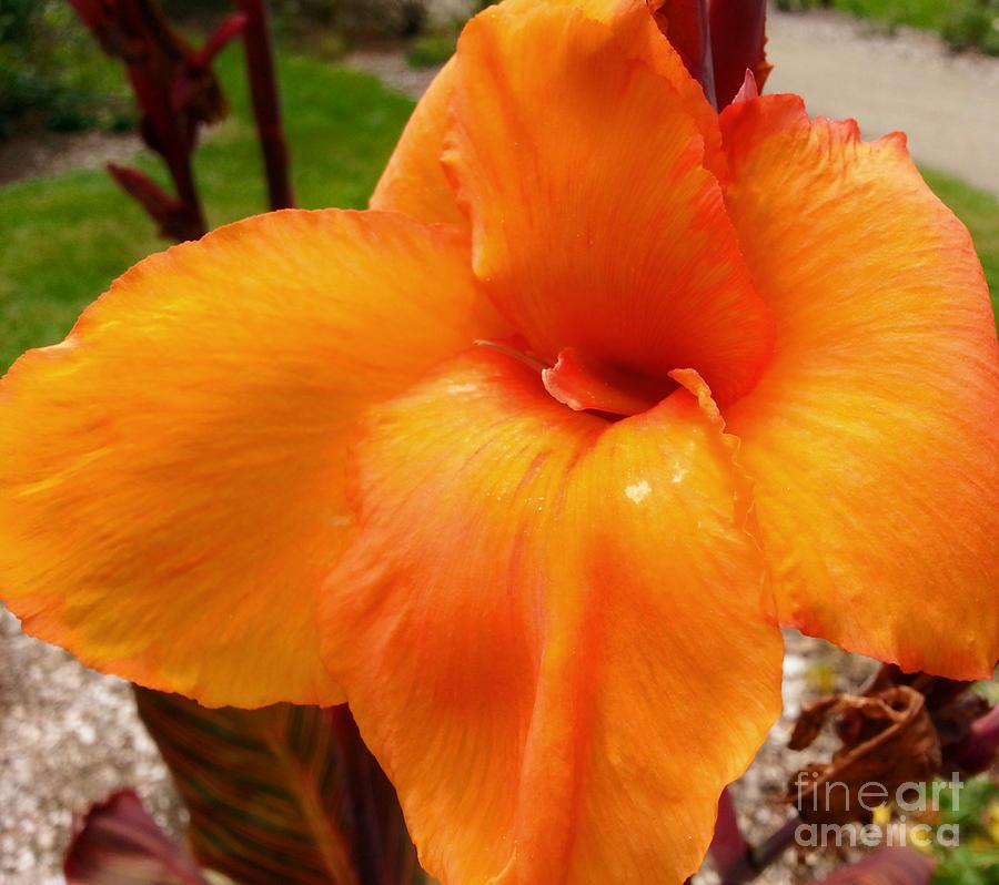 Proud Orange by Robert Knight