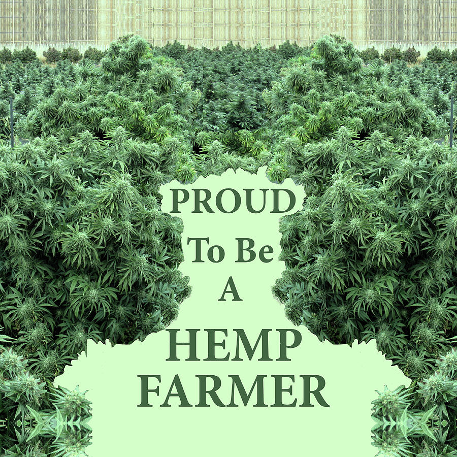 Proud to be a Hemp Farmer at Harvest Time by Julia L Wright