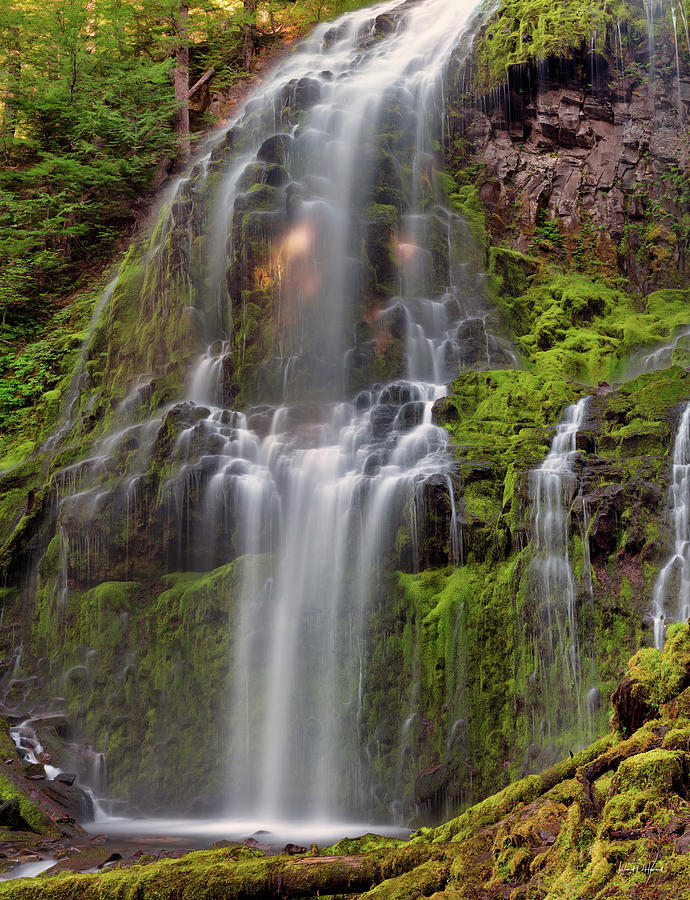 Calm Photograph - Proxy Falls In Warm Light by Leland D Howard