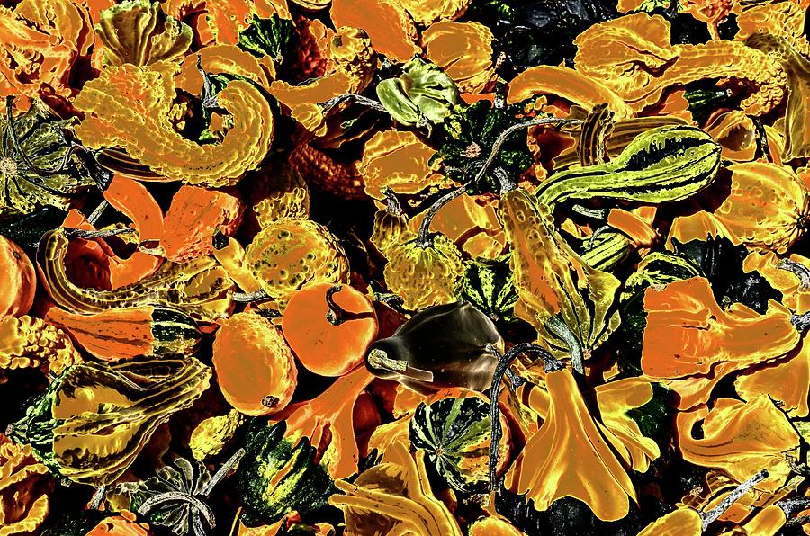 Psychedelic Winter Squash 2 by Paul Croll