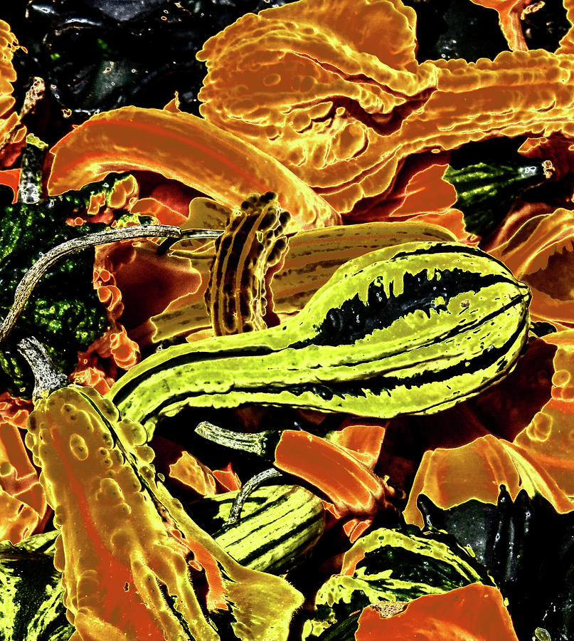 Psychedelic Winter Squash by Paul Croll
