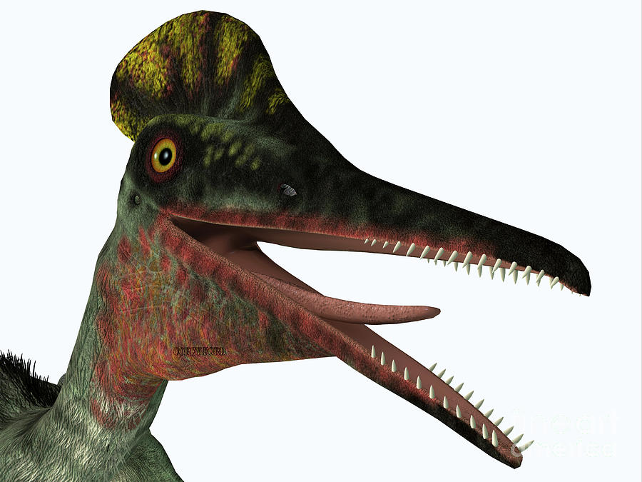 Pterodactylus Pterosaur Head by Corey Ford