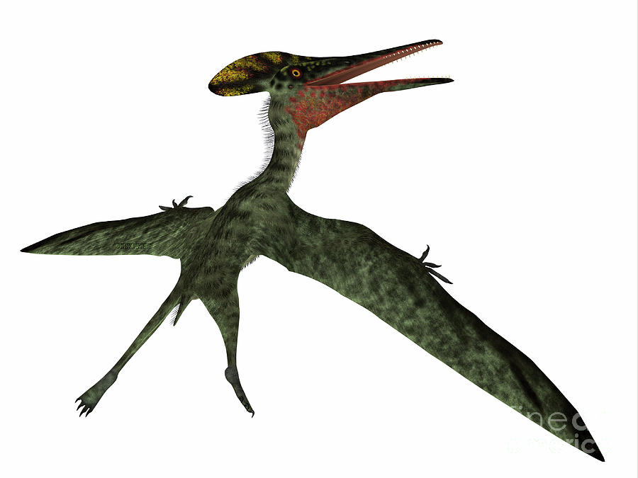 Pterodactylus Pterosaur Tail by Corey Ford