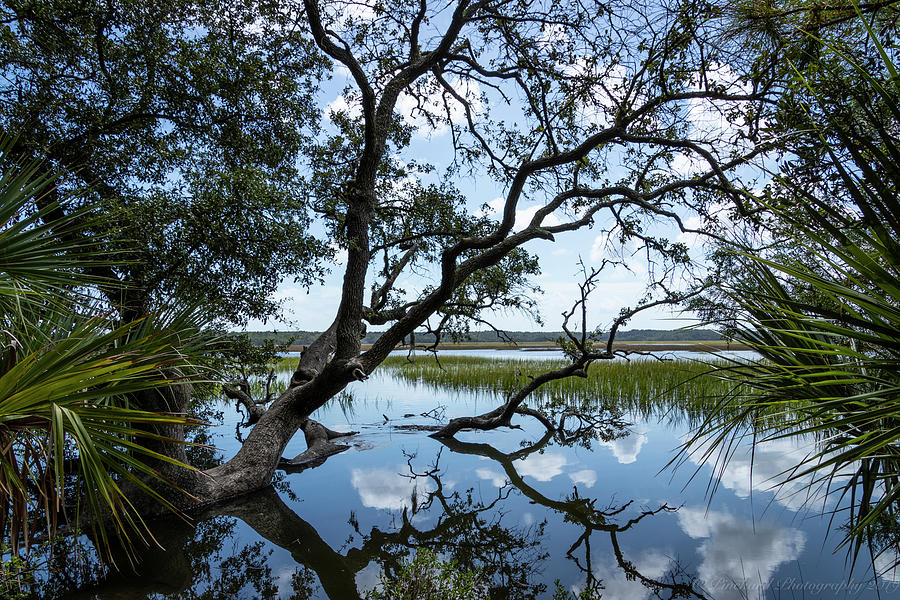 Puffy clouds reflected in the marsh water under an old live oak  by Timothy Pinckard
