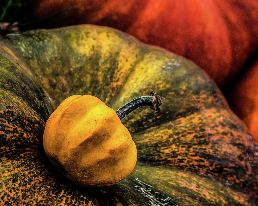 Pumpkin by Michael Arend