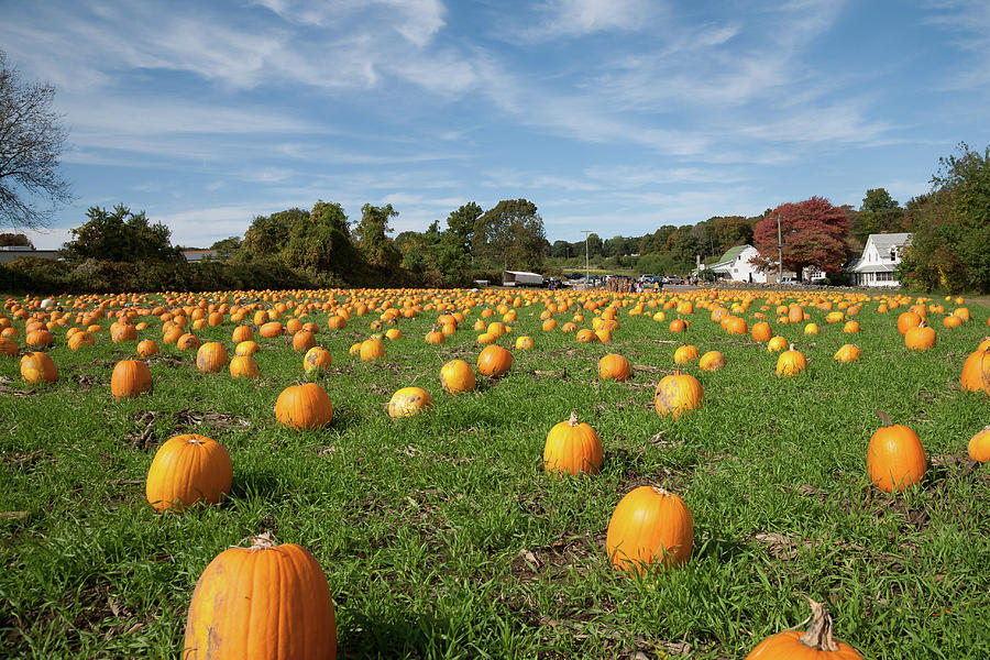 Pumpkin Patch - Willow Spring Farm by Kirkodd Photography Of New England