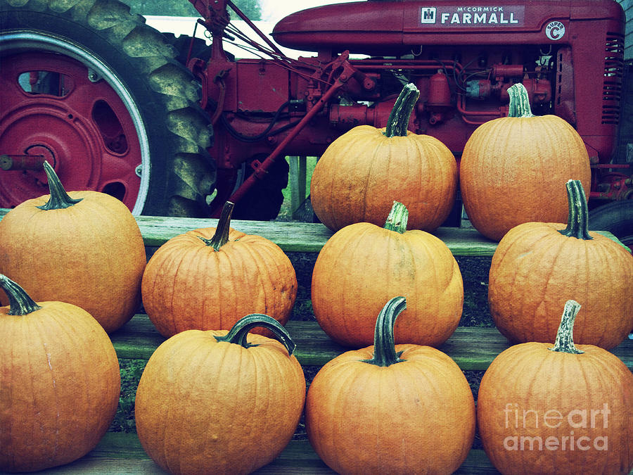 Pumpkin Stand by Mark Miller