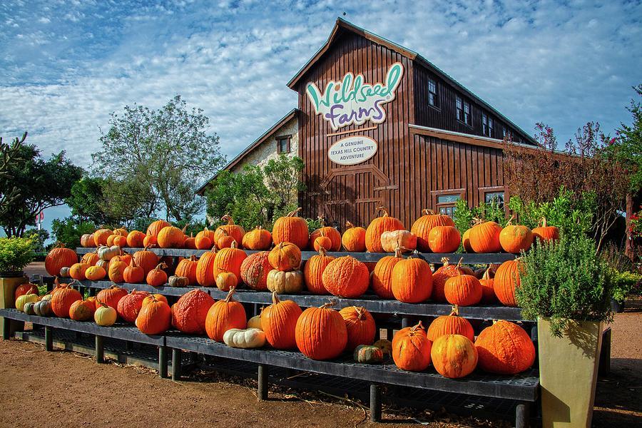 Pumpkin Time at Wildseed Farms by Lynn Bauer