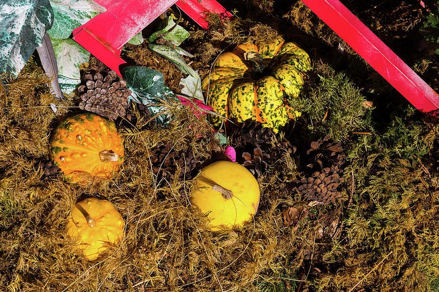 Pumpkins - 1 by Paul MAURICE