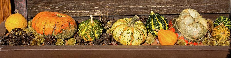 Pumpkins - 2 by Paul MAURICE