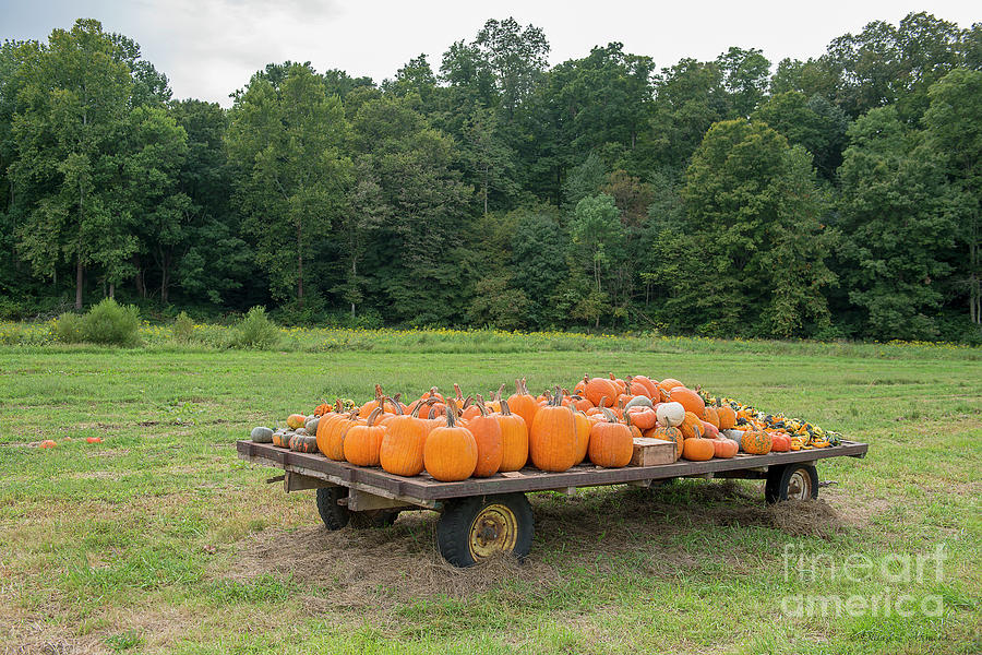 Pumpkins on Flatbed Wagon by David Arment