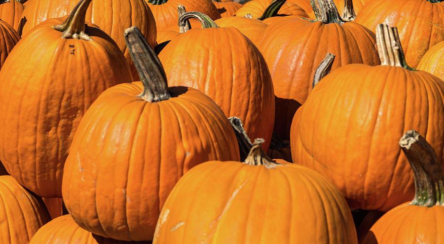 Pumpkins by Stewart Helberg