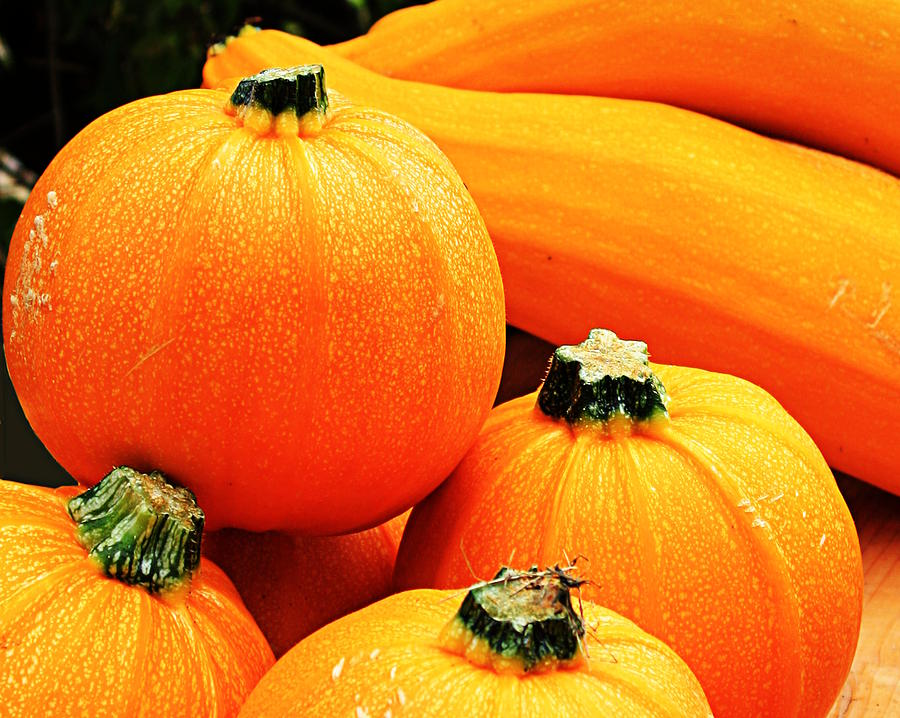 Pumpkins United by Sannel Larson