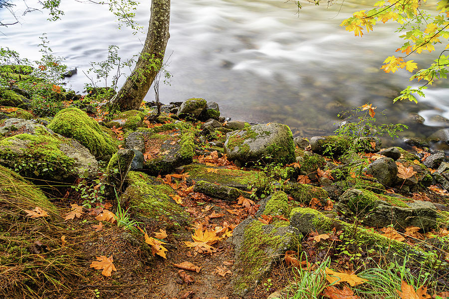 Puntledge River-4 by Claude Dalley