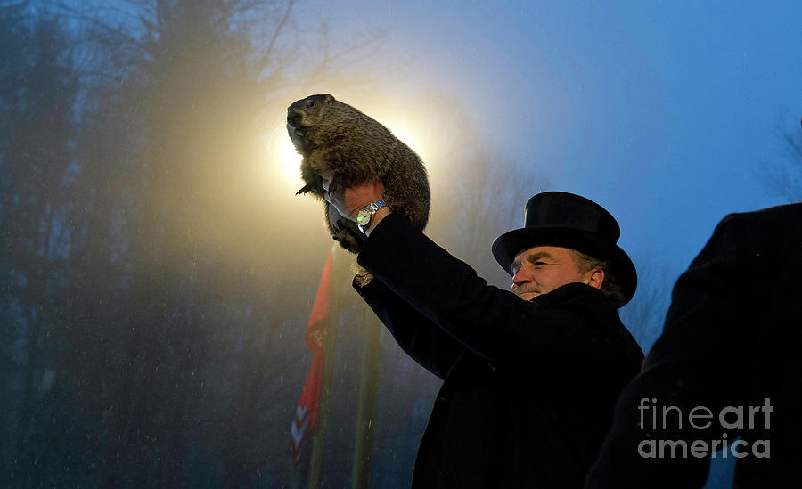 Punxsutawney Phil Makes Annual Forecast Photograph by Jeff Swensen