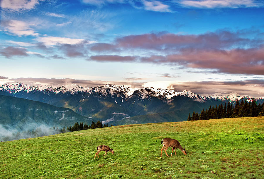Grass Photograph - Puos Deer by Sankar Raman
