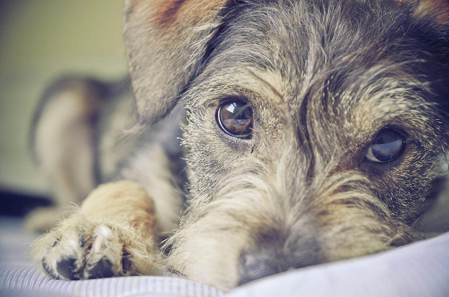 Puppy Dog Photograph by Emily Hall Photography