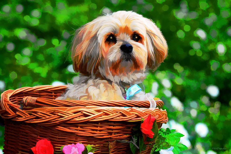 Puppy in a Basket Lhasa Apso - Painting by Ericamaxine Price