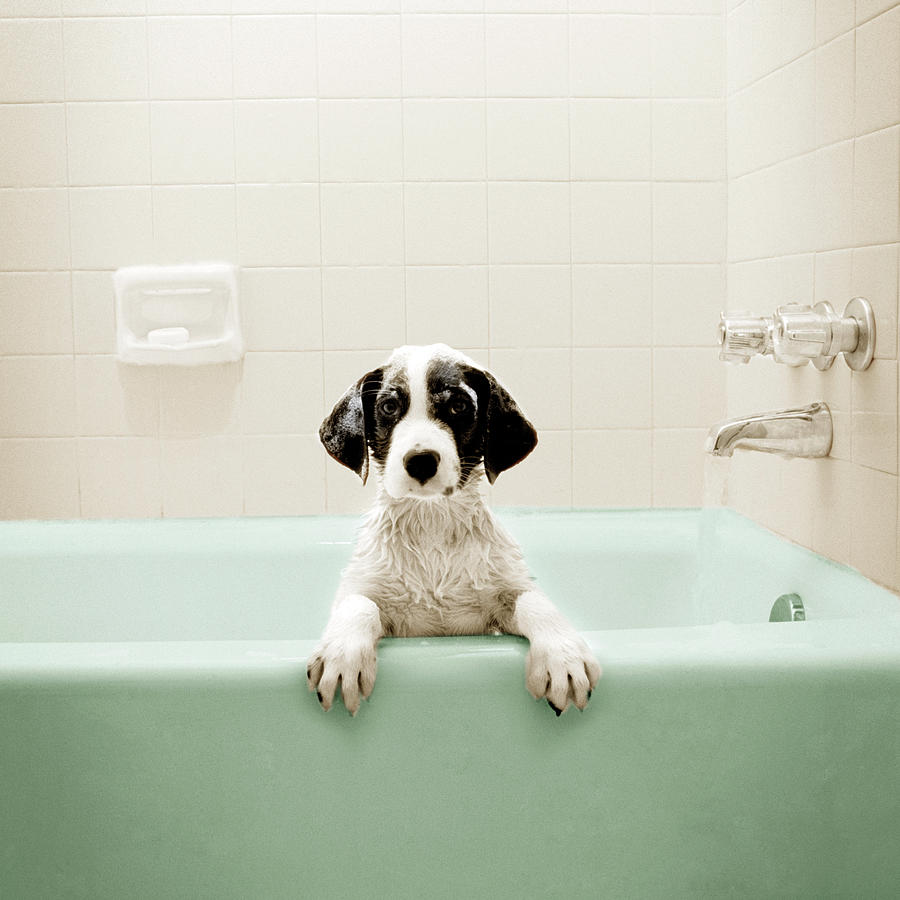 Puppy In Bathtub Photograph by Stevecoleimages