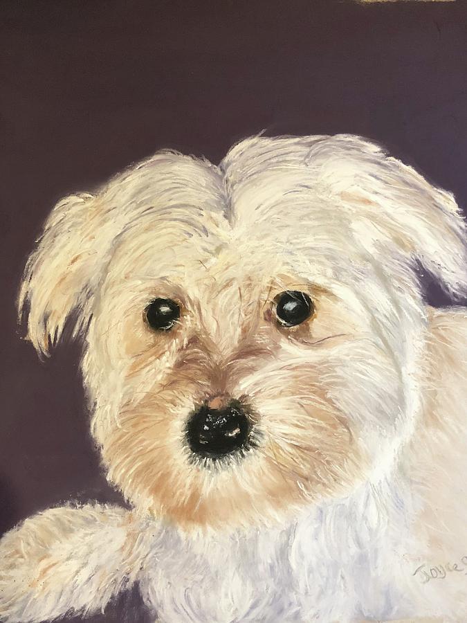 Puppy  by Joyce Spencer