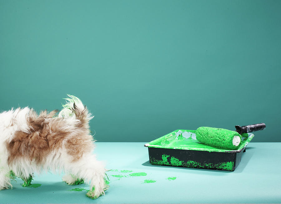 Puppy Making Green Paw Prints From Photograph by Martin Poole