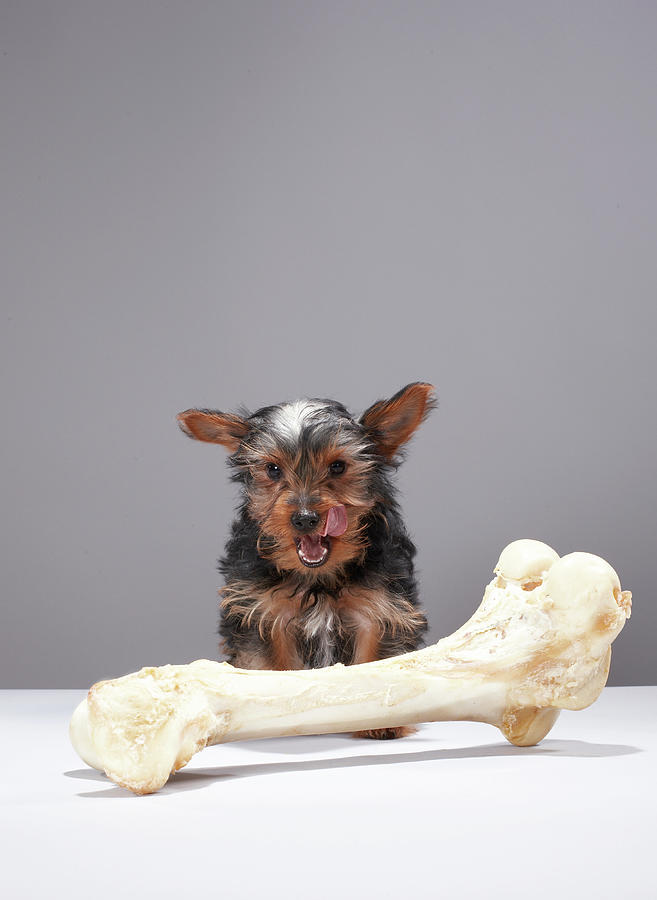 Puppy With Oversized Bone Photograph by Martin Poole