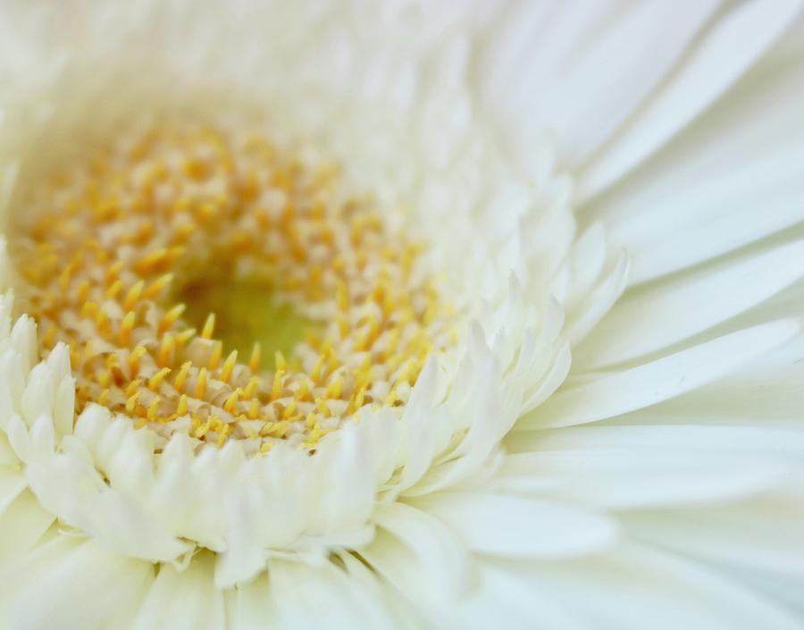 Pure Joy by Sandra Day
