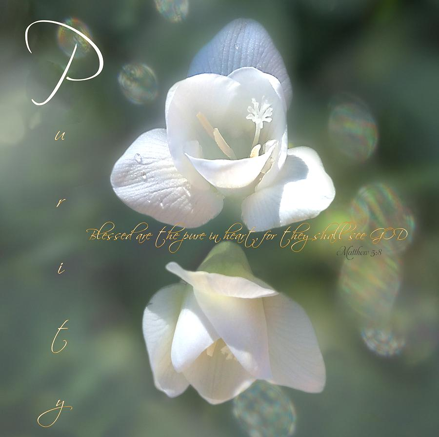 Purity by Valerie Anne Kelly