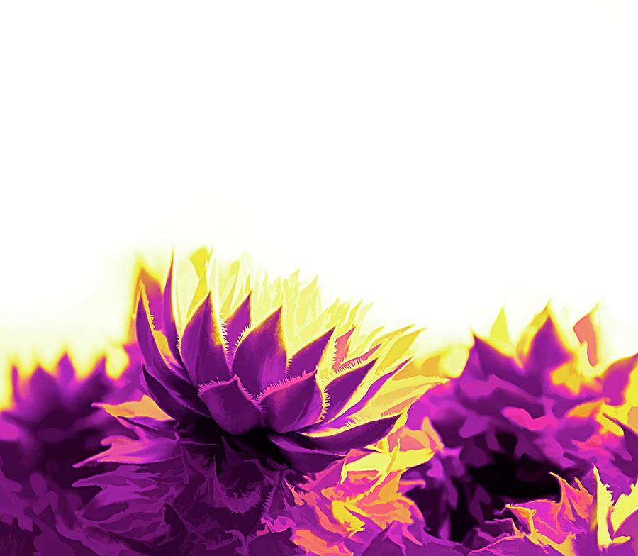 Purple and Yellow Houseleeks by Scott Lyons