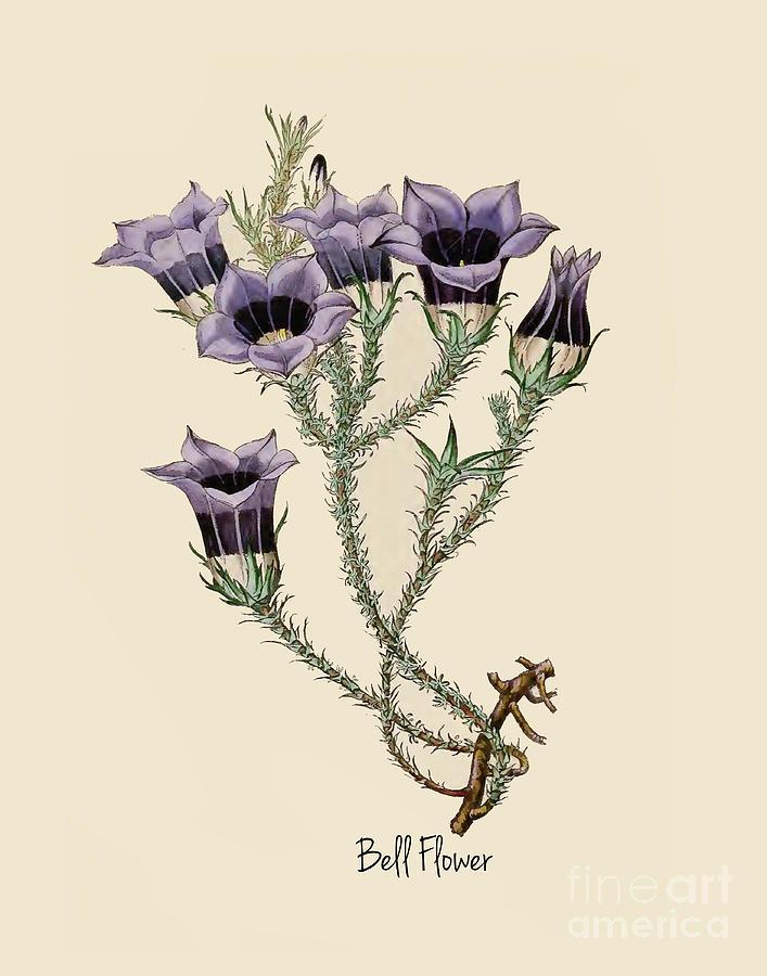 Purple Bell Flower Botany Print by Nikki Vig