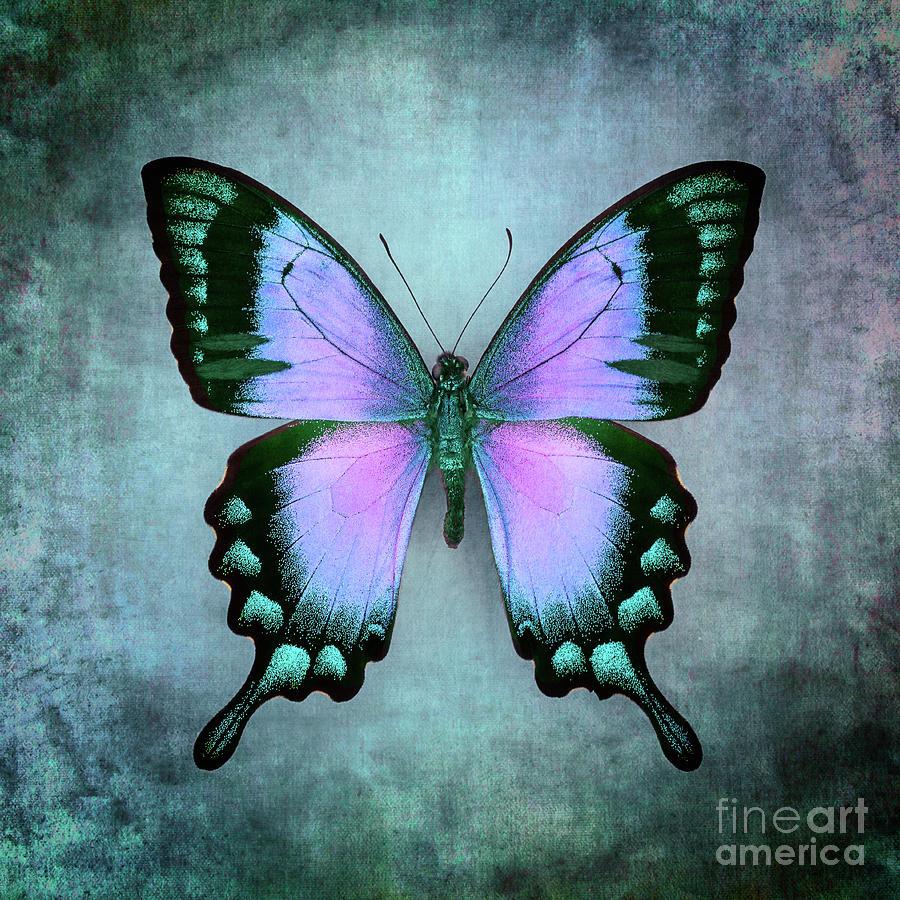 Purple Butterfly by Marco Fischer