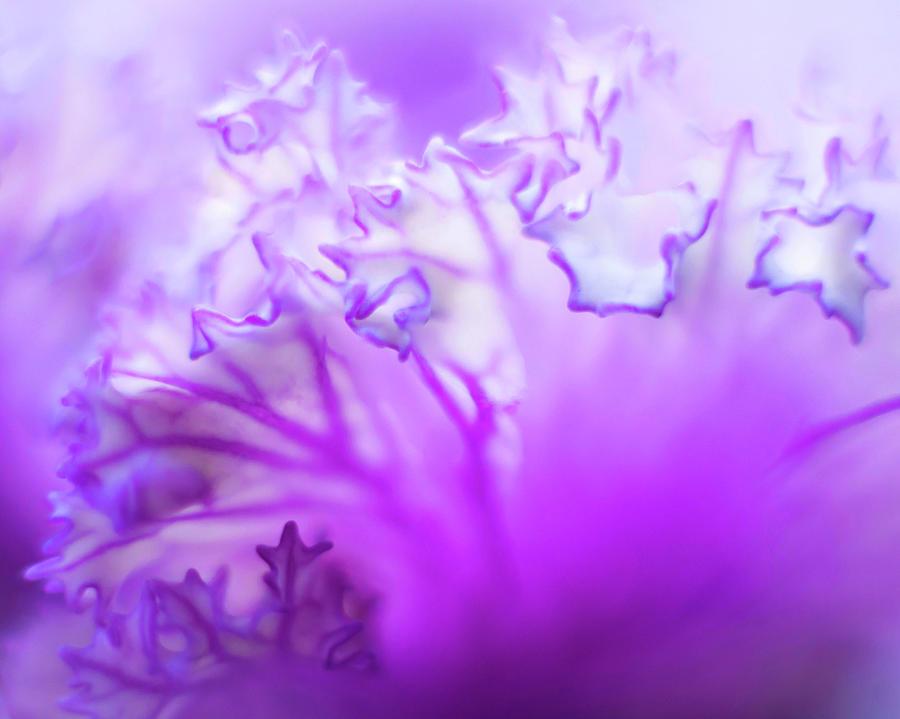 Purple Mystery by Susan Callaway