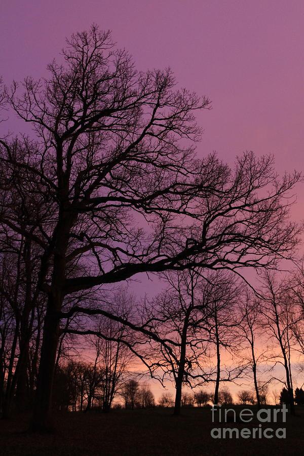 Purple Dawn by Paula Guttilla
