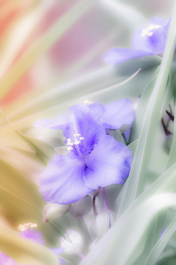 Purple Daydream by Bonnie Bruno