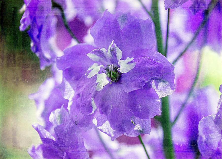 Purple Delphinium by Cindi Ressler