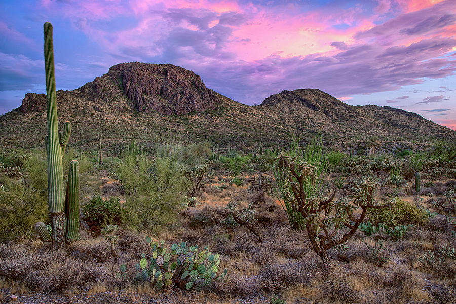 Purple desert sunset by Dave Dilli