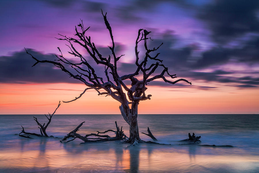 Purple Dreams by Fran Gallogly