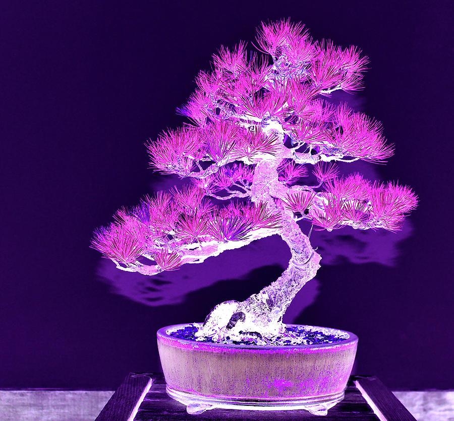 Purple Digital Art - Purple Flame Bonsai by Tom Kelly