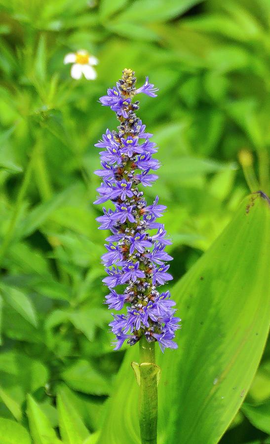Purple flower - Florida by Gene Bollig