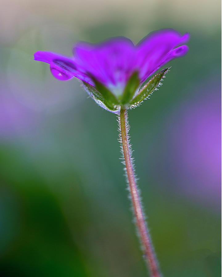 Flower Photograph - Purple Flower by John Rodrigues
