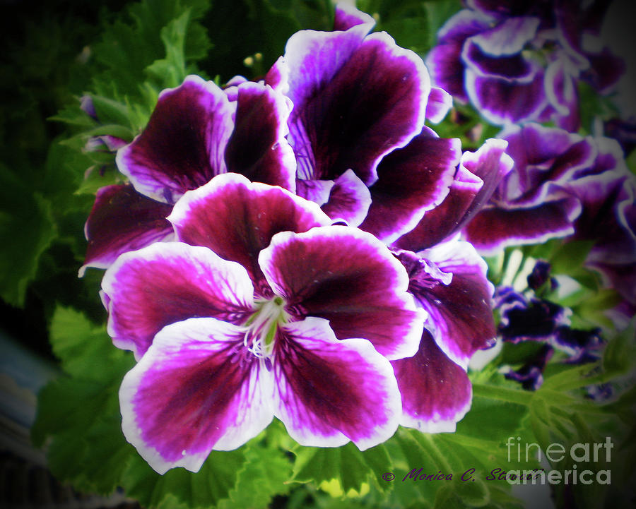Purple Flower PR 7 by Monica C Stovall