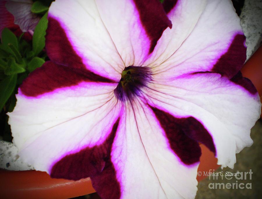 Purple Flower PR8 by Monica C Stovall