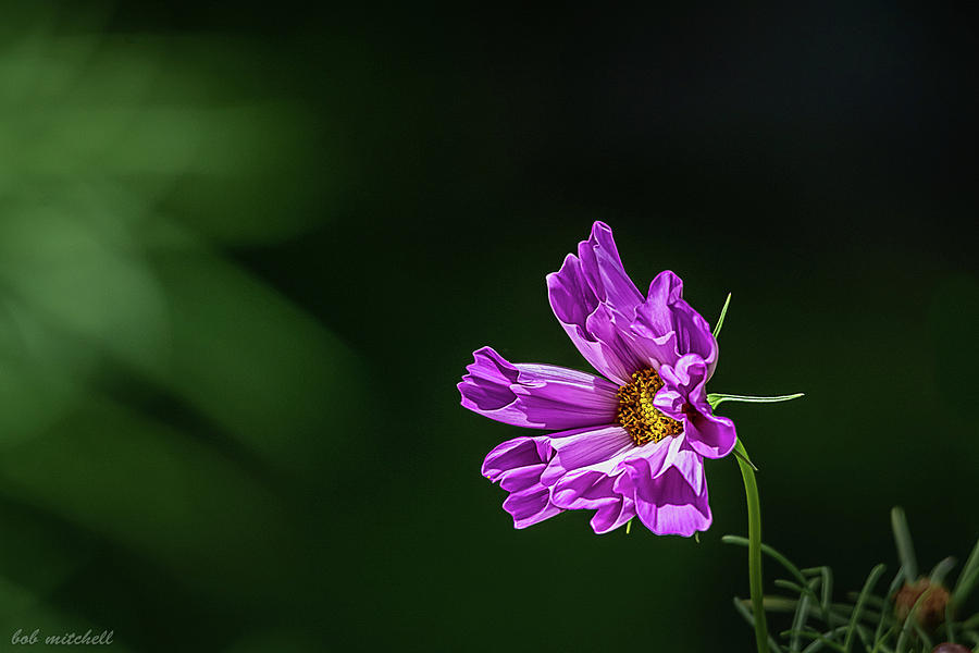 Purple Flower by Robert Mitchell