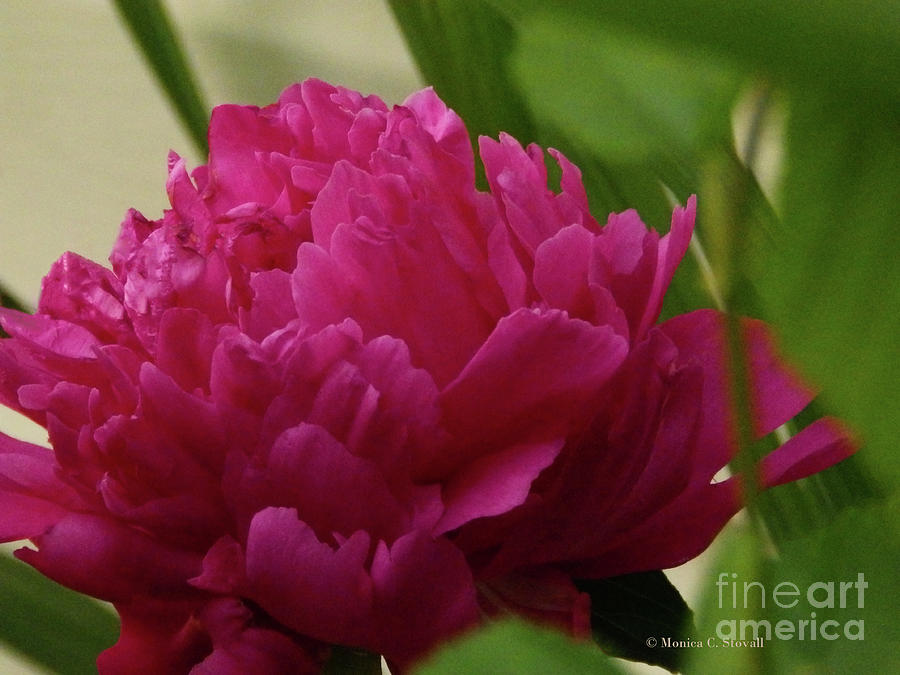 Purple Flowers PR12 by Monica C Stovall