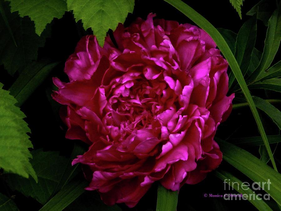 Purple Flowers PR11 by Monica C Stovall