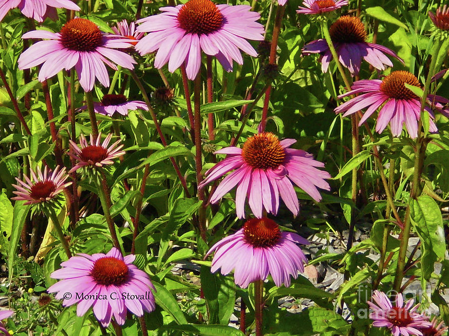 Purple Flowers PR4 by Monica C Stovall