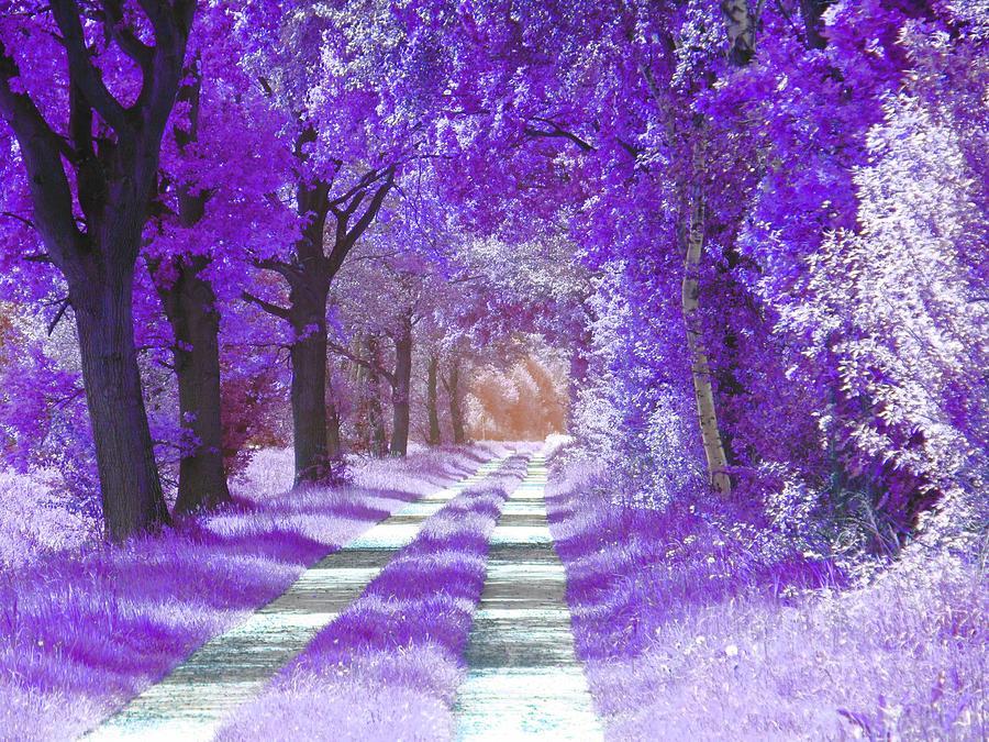 Purple forest by Patricia Piotrak